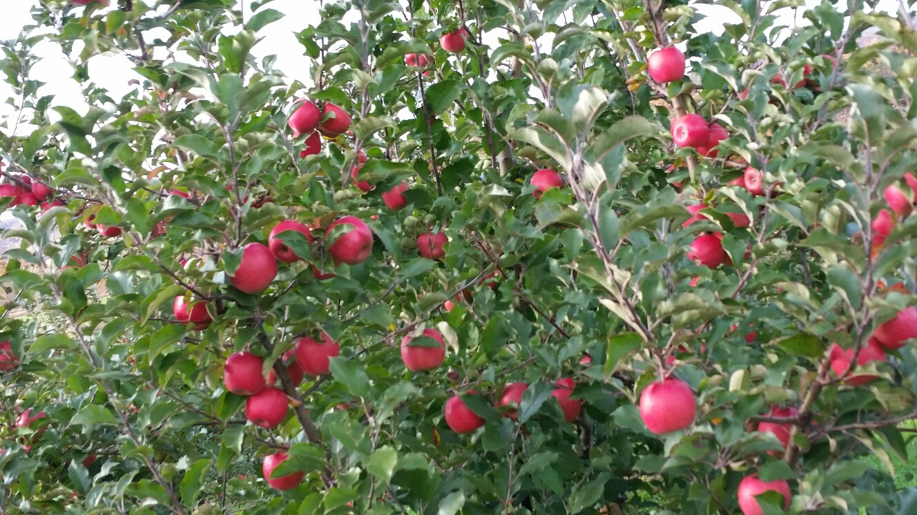 Improve your Hunting Area with Apple Trees