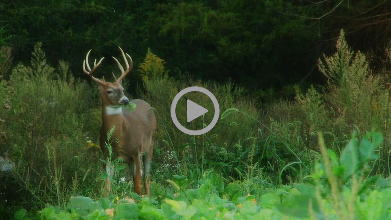 First Bucks