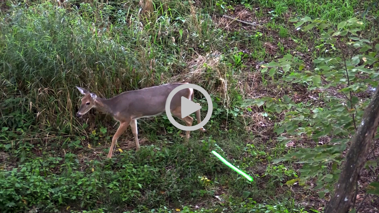Doe Management