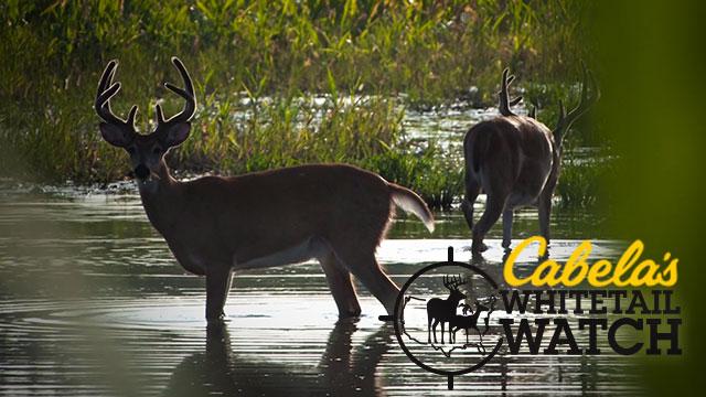 Deer Hunting Tips, Videos & Strategies - cabelas.com