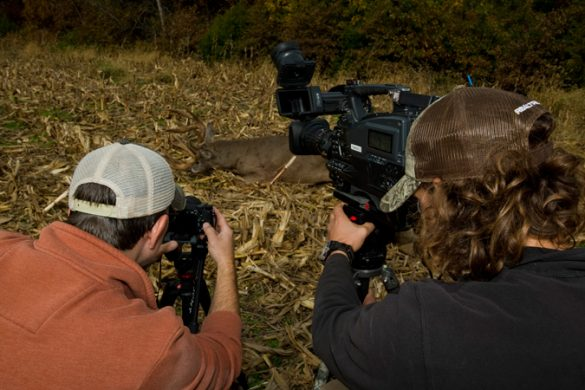 Midwest Whitetail Internship