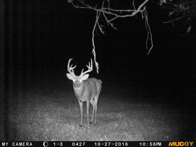 Ohio Food Plots and Scouting