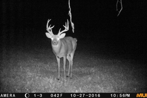 Ohio Food Plots and Shed Hunting