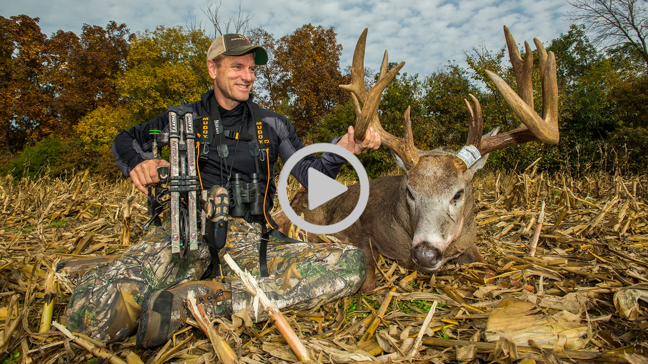 Massive Buck