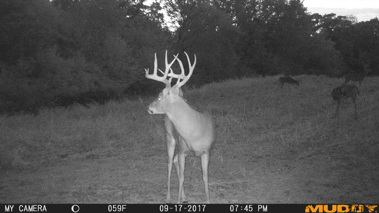 Three-Year-Old Buck