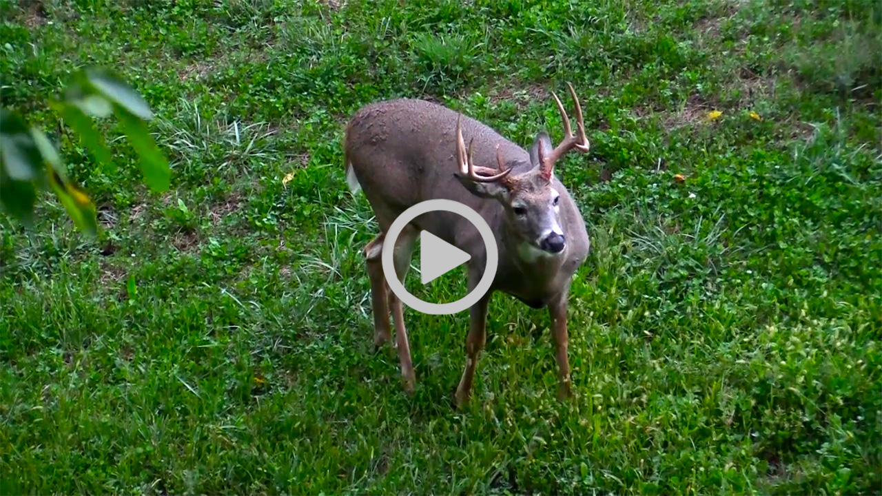 Best Rut Dates Beating The Lull Midwest Whitetail