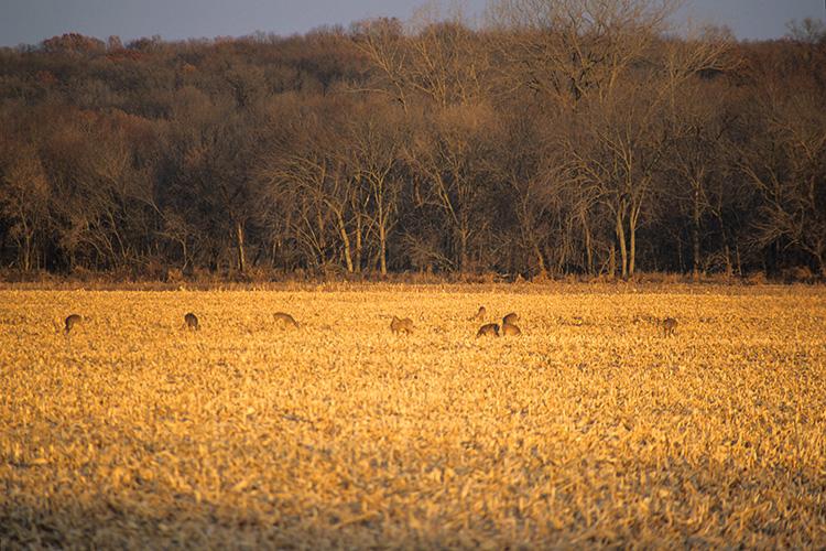 Deer Density vs Antler Size